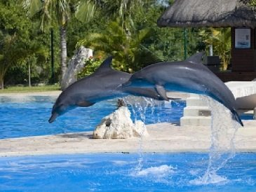 Cancun Swim With the Dolphins